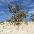 Lone Tree at Palm Beach by aussiebushstick