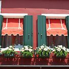 Burano windows by Elena Skvortsova