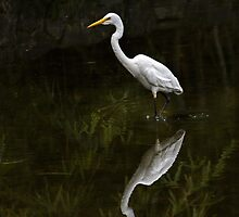 Reflected egret for iPhone by Celeste Mookherjee