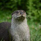 Otter by Jonathan Goddard