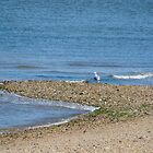 Lone Seagull by Mark Fendrick