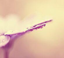 dreamy daisy by Ingz