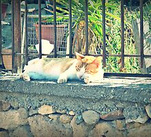 Ginger and white cat taking a snooze, Crete, Greece by Susan Wellington