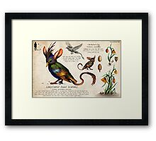 The Jewel Starling Framed Print