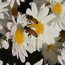 Bee Buddies by Jan  Tribe