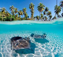 Two Stingrays in Tahiti by printscapes