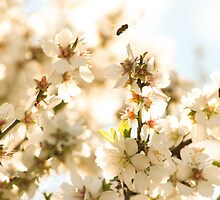 Blossoms and a bee by CarlaHarvie