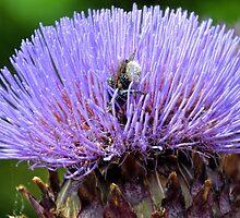 Swimming In Pollen by lynn carter