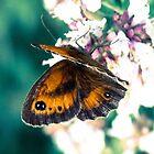 Butterfly in the garden  by SusieMcLaren