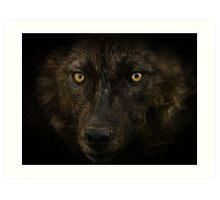 Midnights Gaze - Black Wolf Wild Animal Wildlife Art Print
