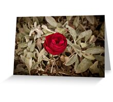 Autumn red rose, vintage Greeting Card
