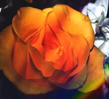 Gold rose by ♥⊱ B. Randi Bailey