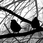 Birds In Shadow - Black and White Version by MSRowe Art and Design