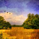 Summer Country Landscape by Lois  Bryan
