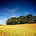 North Yorkshire Cornfield & Copse 3 by eatsleepdesign