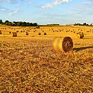 Field with rolls of straw in late summer by 7horses