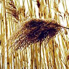 Reeds by MSRowe Art and Design