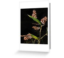 Magical Gathering Of The Zebra Butterflys Greeting Card