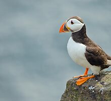 Puffin on rock by M.S. Photography & Art