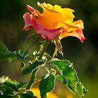 Raw Beauty by George Parapadakis (monocotylidono)