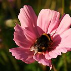 Bumblebee and Flower by Lina Ottosson