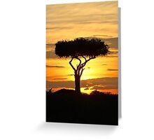 Boscia tree against the Kenyan sunset (watercolour) Greeting Card