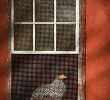 Animal - Bird - Chicken in a window by Mike  Savad