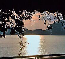 Bathed In Evening Light-  Corfu by lynn carter