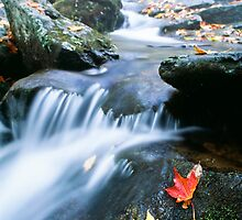 Shenandoah National Park by printscapes