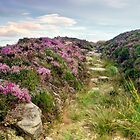 Heather on Simonside Hills by Chris Frost Photography
