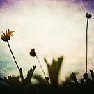"""""""Love is the flower you've got to let grow"""" John Lennon  by Denis Marsili - DDTK"""