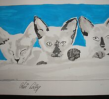 Kittens by Colin  Laing