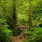 Magic Rainforest by Michael Matthews