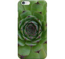 Houseleek (Sempervivum) Photo with purple tips iPhone Case/Skin