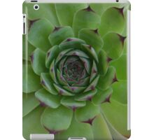 Houseleek (Sempervivum) Photo with purple tips iPad Case/Skin