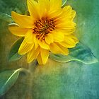 Small Sunflower by JMP-Graphics