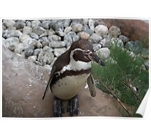 Posing Penguin Poster