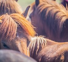 Horses by Ruben D. Mascaro