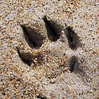 Dog Paw in the Sand  by Kelly Betts