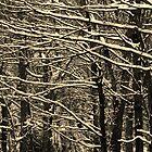 Branches by Wojtek  Jaskiewicz