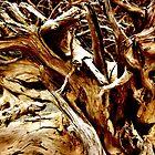 Roots by Wojtek  Jaskiewicz