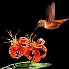 AMAZING NATURE~ by RoseMarie747