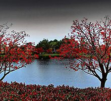 Erythrina Trees  by EOS20