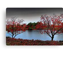 Erythrina Trees  Canvas Print