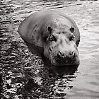 A Hippo's work is never done by Richard Alton