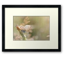 Sunbathing butterfly... Framed Print