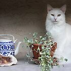 Still Life With Cat by heatherfriedman