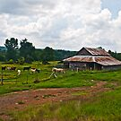 Summer Day on the Farm by Lisa G. Putman