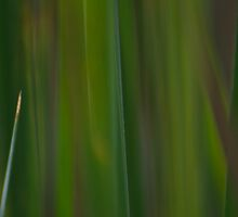 Lost in the Reeds by photojeanic