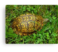 Eastern Box Turtle in Alabama Canvas Print